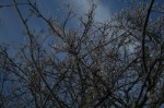 The branches of a tree in front of the blue morning sky which gave me the reason to go out for photographing.
