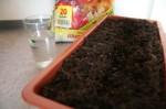 radish-seeds